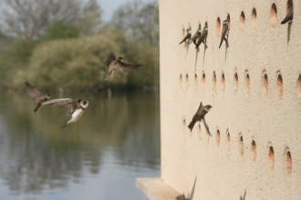 Sand Martin Hide Attenborough