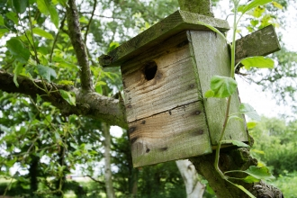 Nest Box at Osmanthorpe Orchard NottsWT credit Al Greer