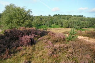 Rainworth Heath Notts WT