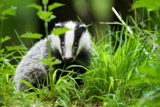 Badger Cpt Elliott Neep
