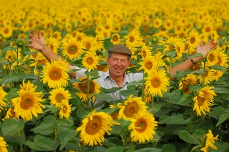 Nicholas stands in a field of sunflowers
