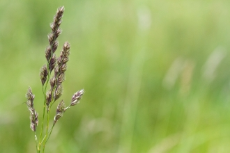 Grass at Osmanthorpe Orchard