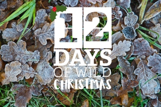 12 Days of Wild Christmas logo