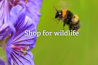 Shop for wildlife and bumblebee