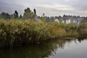 River with reedbed and housing in the background, The National Forest, UK
