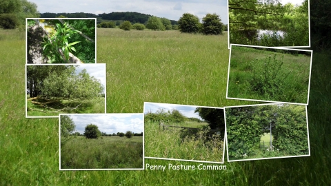 Penny Pasture Common NottsWT cpt Tony Summers