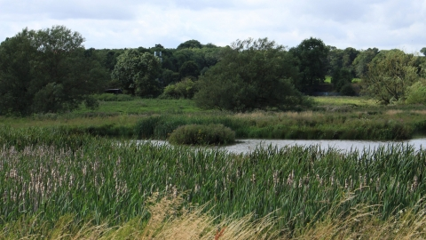 Aldercar Flash Reed bed and pond view