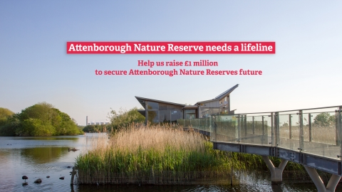 Attenborough Nature Reserve needs a lifeline. Help us raise £1 million to secure Attenborough's future