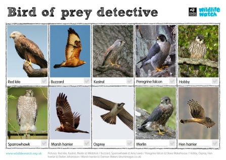 Bird of Prey Wildlife Watch spotting guide.