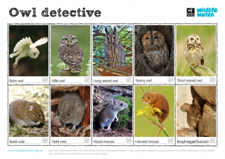 Owls Wildlife Watch Spotting sheet