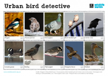 Urban Birds Wildlife Watch Spotting sheet
