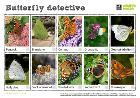 Butterfly detective Wildlife Watch spotting sheet updated