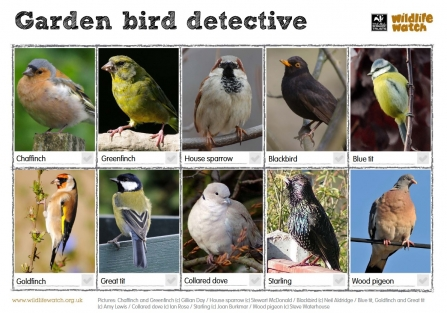 Garden Bird Detective Wildife Watch spotting sheet