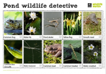 Pond Wildlfie Detective Wildife Watch spotting sheet