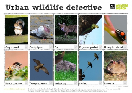 Urban Wildlife detective Wildlife Watch spotting sheet updated