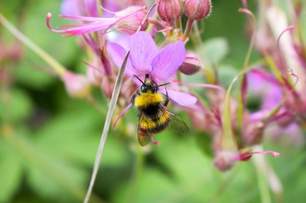 Bee on flower - cpt Heather Keetley