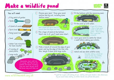 Build a Pond (1) - Wildlife Watch