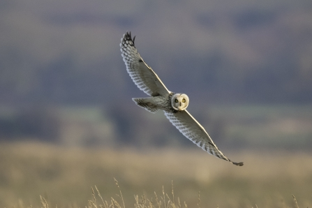 Short Eared Owl Mike Vickers Idle Valley