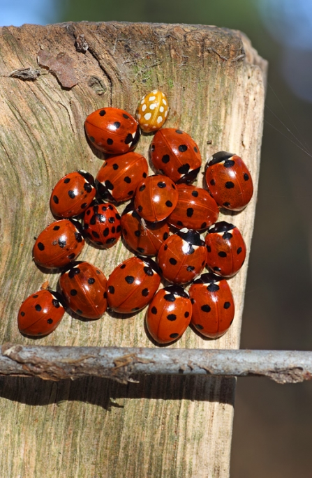 Ladybirds Matt Berry