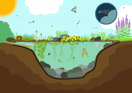 Wild about gardens ponds illustration