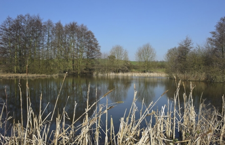Reed Pond, Lambley by Paul Fitzgerald