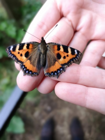 Butterfly being held in hands