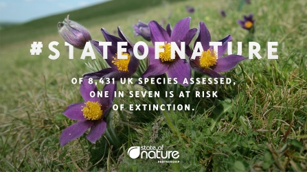 #State of Nature: of 8431 UK species assessed, one in seven is at risk of extinction