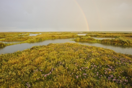 Rainbow over Salt Marsh
