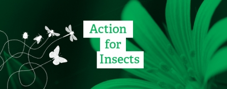 Action for Insects