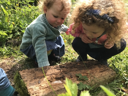 City Nature Challenge bug hunt