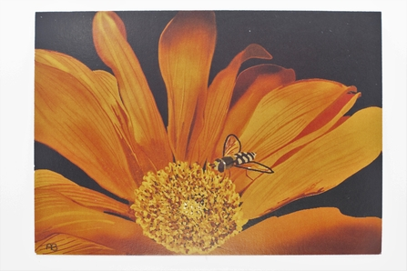 Postcard Show entry Sowing reward. A painting of a hoverfly on an orange flower.