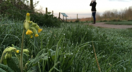 Cowslip and dew-soaked grass as a woman is birdwatching at Idle Valley Nature Reserve