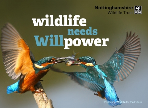 Wildlife needs willpower
