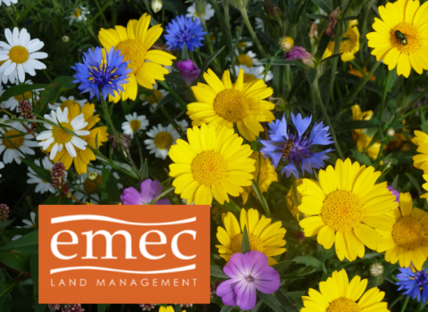 EMEC land management